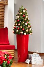 Ziemassvētku eglīte LECHUZA kašpo