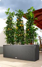 Orangen im LECHUZA-TRIO