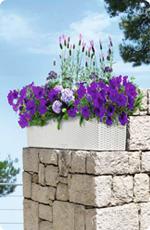 Pflanztipps für Balkonblumen in LECHUZA BALCONERA