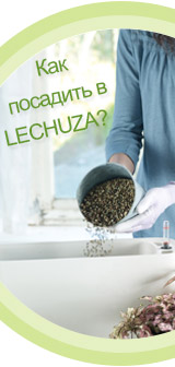 Как посадить в LECHUZA
